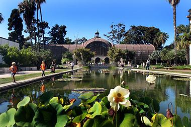 Lily Pond, Balboa Park